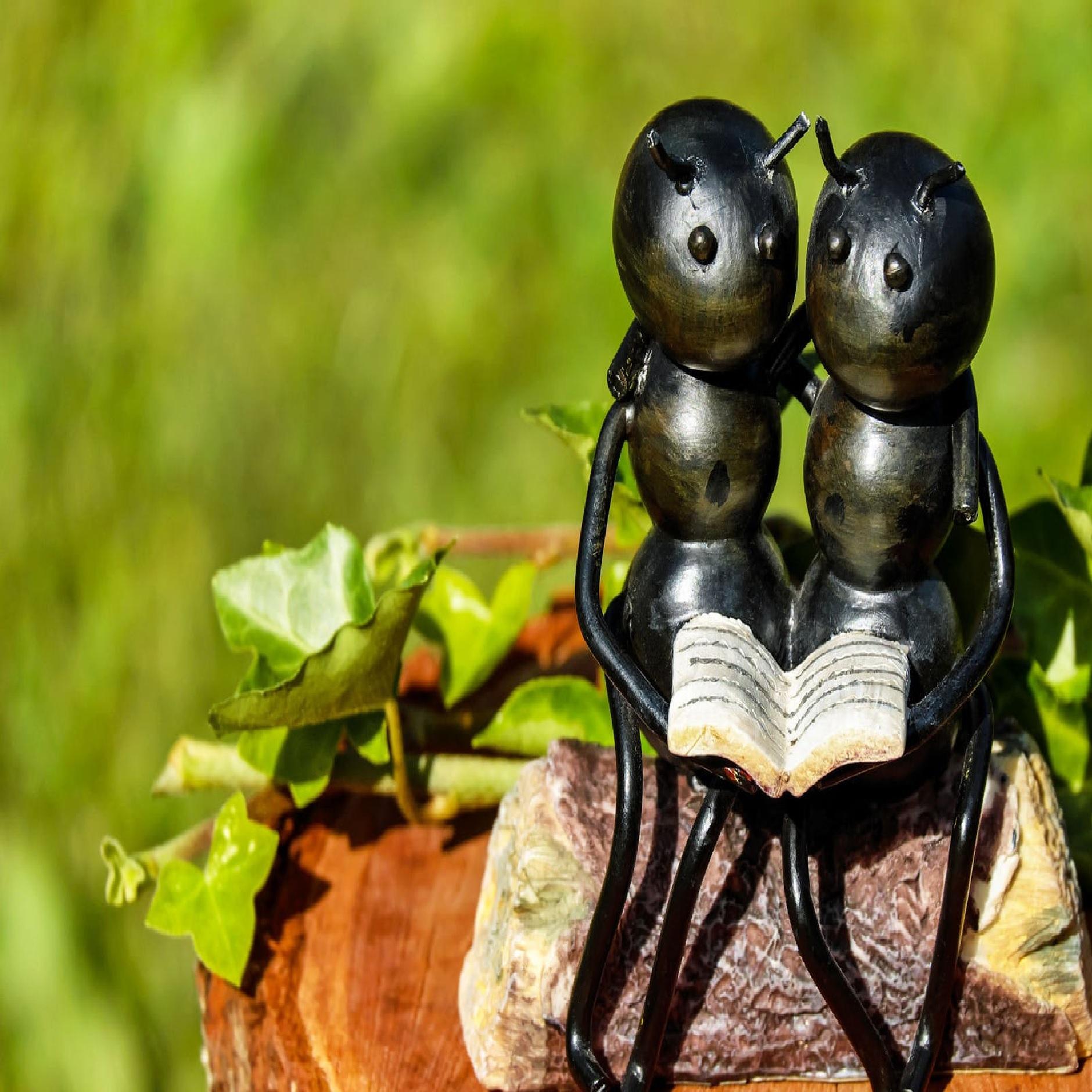 SCOALA ANTREPRENORIALA ANTS